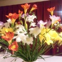 シャンソン歌手リリ・レイLILI LEY  真冬の氷点下 シャンソン部屋の花達