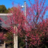 筑後川の戦いと宮の陣神社