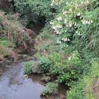 首里の金城町の石畳は何回か歩いたけど、浦添の普天満参詣道(当山の石畳道)もいいね!