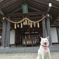 健康と伊豆と愛犬と私。