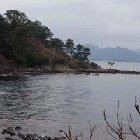 萩市の笠山のツバキを見に行きました、