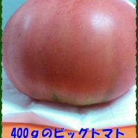 ☆手作り (^_-)-☆
