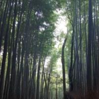 京都 嵐山観光