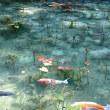 モネの池と天空の茶畑