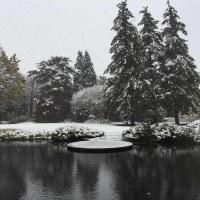 昭島雪景色 in November