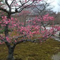 冬の京都を歩く