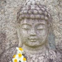 スイセンの咲く頃 ~般若寺