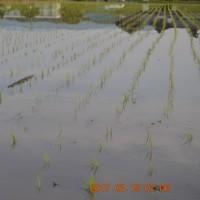 春が来た!早場米の植え付け完了