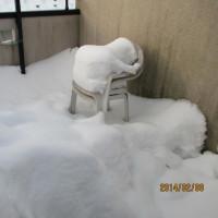 きれいな雪