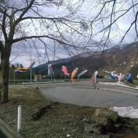 楯山公園開花状況 2016.04.21