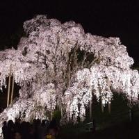 福島県の桜の名所へ行ってきた・・・②
