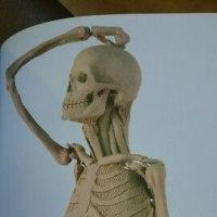 筋肉オタクにおススメ!【立体像で理解する美術解剖】