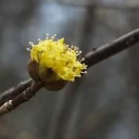 木に咲く黄色い花