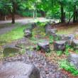 夏の涼しい雨の日