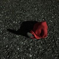 日乗 diary - 落としモノ 手袋56 lost glove56