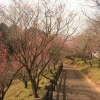 梅の里公園(津山市神代)