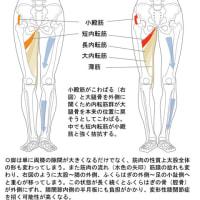 O脚で膝の内側に痛みを感じたら要注意‥‥変形性膝関節症にならないために