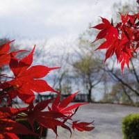 琵琶湖のあたりで紅葉を見てきました。ペンタックスQ-S1で撮影。