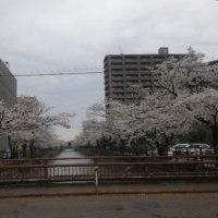 春だけど...