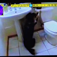 5/26 人間のトイレを使う犬