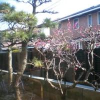 ようやく春ってカンジ~☆☆☆