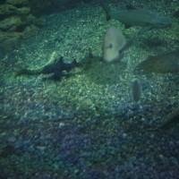 20161011 江島の新水族館 10 Carl Zeiss Distagon 35mm F2 ZE
