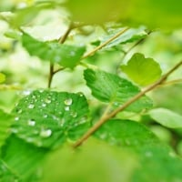 雨上がりの赤塚植物園 後編(2017年6月25日撮影)