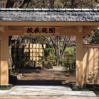 ・ 横浜公園~山下公園へ しだれ桜3分咲きでした 2017