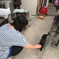白猫VS黒猫 騒動
