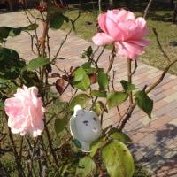 夏の 名残りの 薔薇  だ ... ワン。