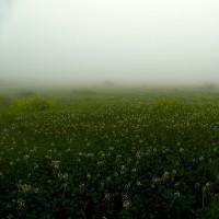 霧と雨の桑の木台湿原