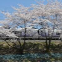 4月23日撮影 その5 みどり湖にて桜と part3