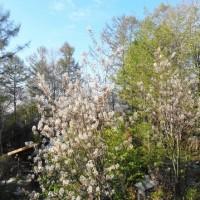 蛙始鳴 (立夏の初候で、5月5日から5月9日まで)遅い春
