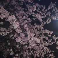 ちゅん子の機織り通信♪ 桜つながり?なダーラドレル♪♪