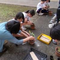 特別支援学級 第1回菊ボラ始動!