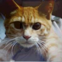 猫ちゃんいらんかねー