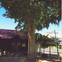 地の神が宿るご神木のある中の島神社