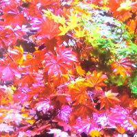 あ~~ 嫌な気分だ 秋の紅葉で気分転換
