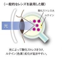 6月24、25日はルテイン測定会開催します