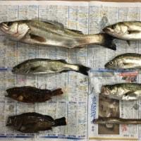 知多沖の五目釣り