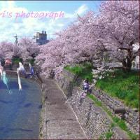 10日前の桜風景