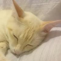 イケメン珀ちゃんの寝姿はやっぱりイケメン❕