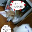 2017 7/28★今日はまめ吉君です~♪