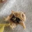 サンレモクイーンの種採る
