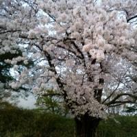 「しんそう」東京研修会 2017年4月8日9日