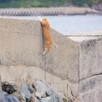 ひっつき虫改め、「コップのフチ子さん」ならぬ「防波堤のフチネコさん」ネコ発見! @相島のネコたち