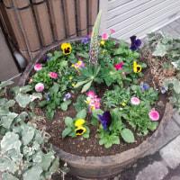 さりげなく・・花たち・・(+o+)