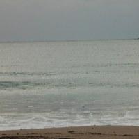 2月28日御宿海岸