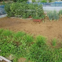 5月29日・畑の草取り作業