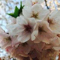 桜のブーケ。